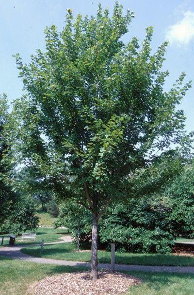 Pin On Trees Shrubs