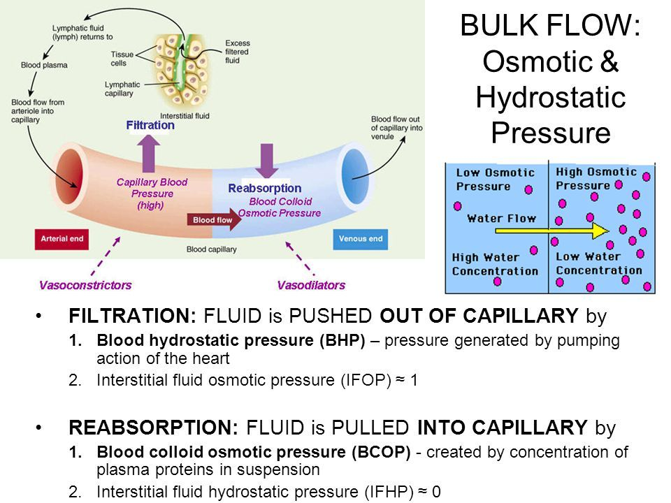 Image result for blood hydrostatic pressure and blood ...