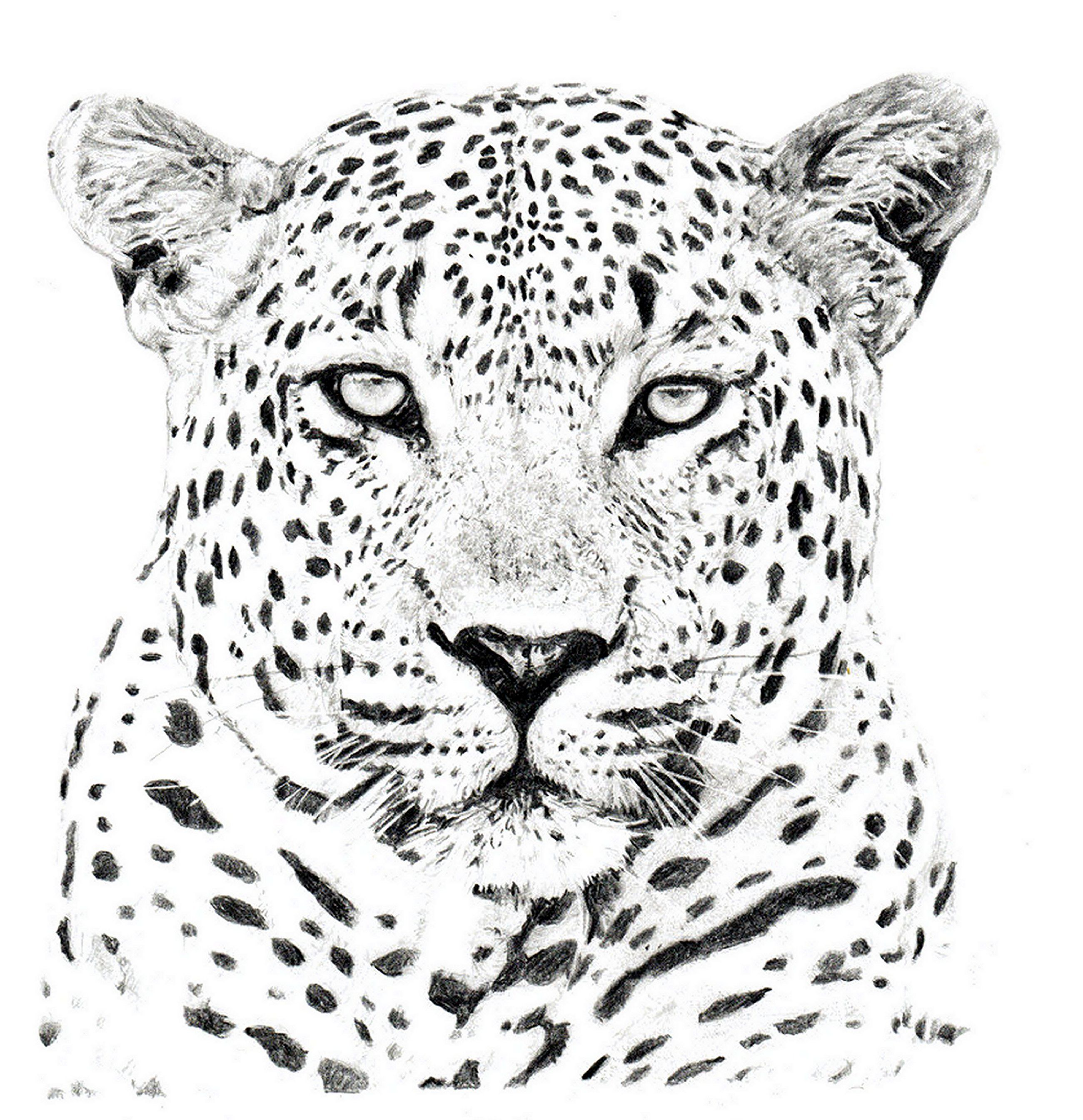 e1ab03100 Leopard Head | Altered Book Ideas in 2019 | Leopard tattoos, Leopard ...