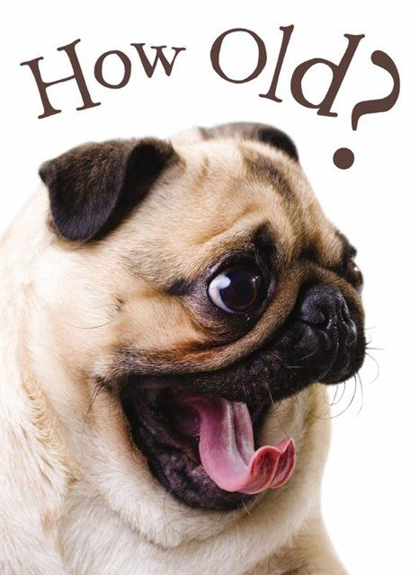 Pug Birthday Ecards