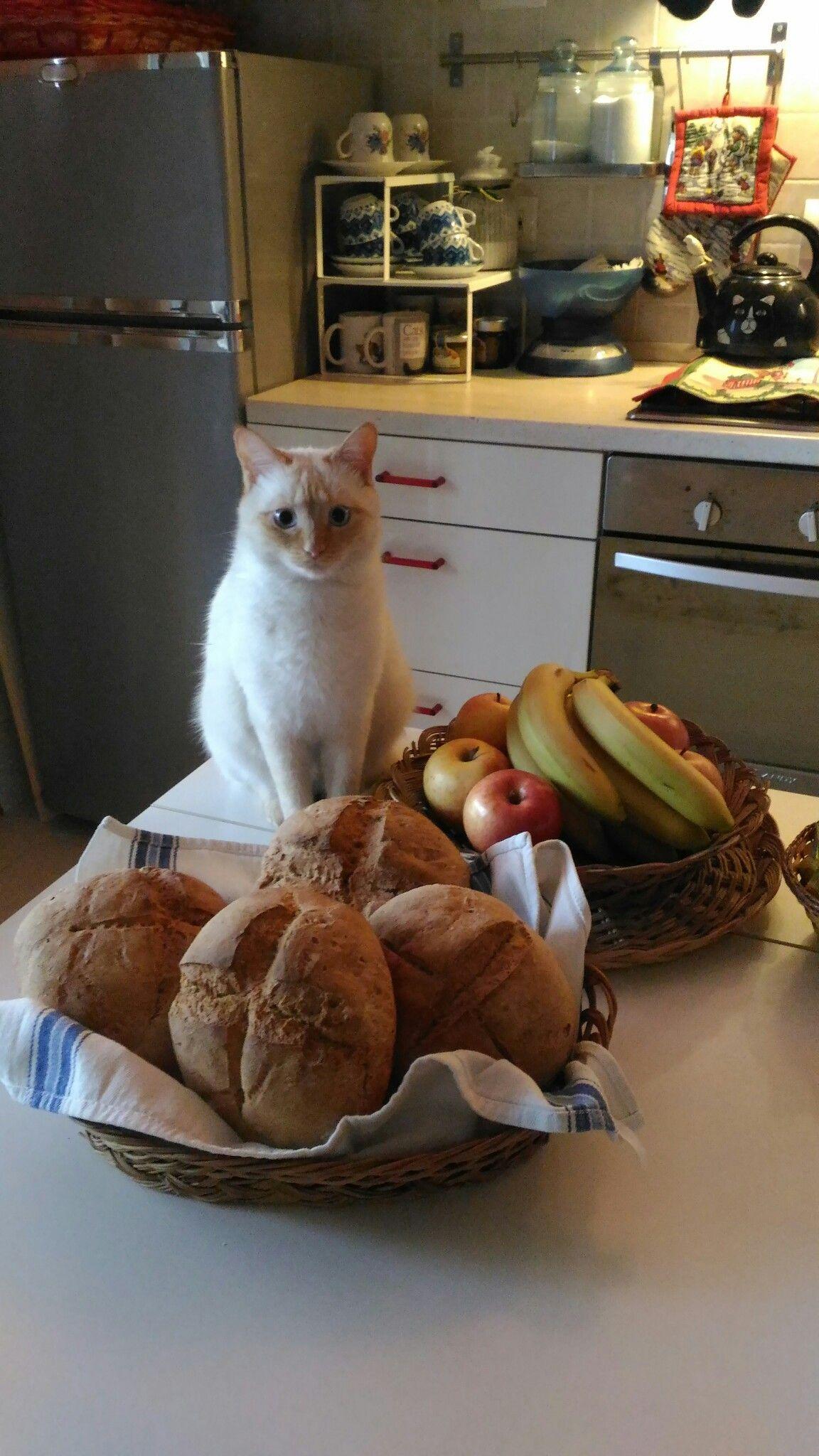 """Mia mostra tutta seria il frutto del suo lavoro:""""Mammina, ho fatto il pane, sono stata brava? Giuro, non ne ho rosicchiato neanche una briciolina!"""""""