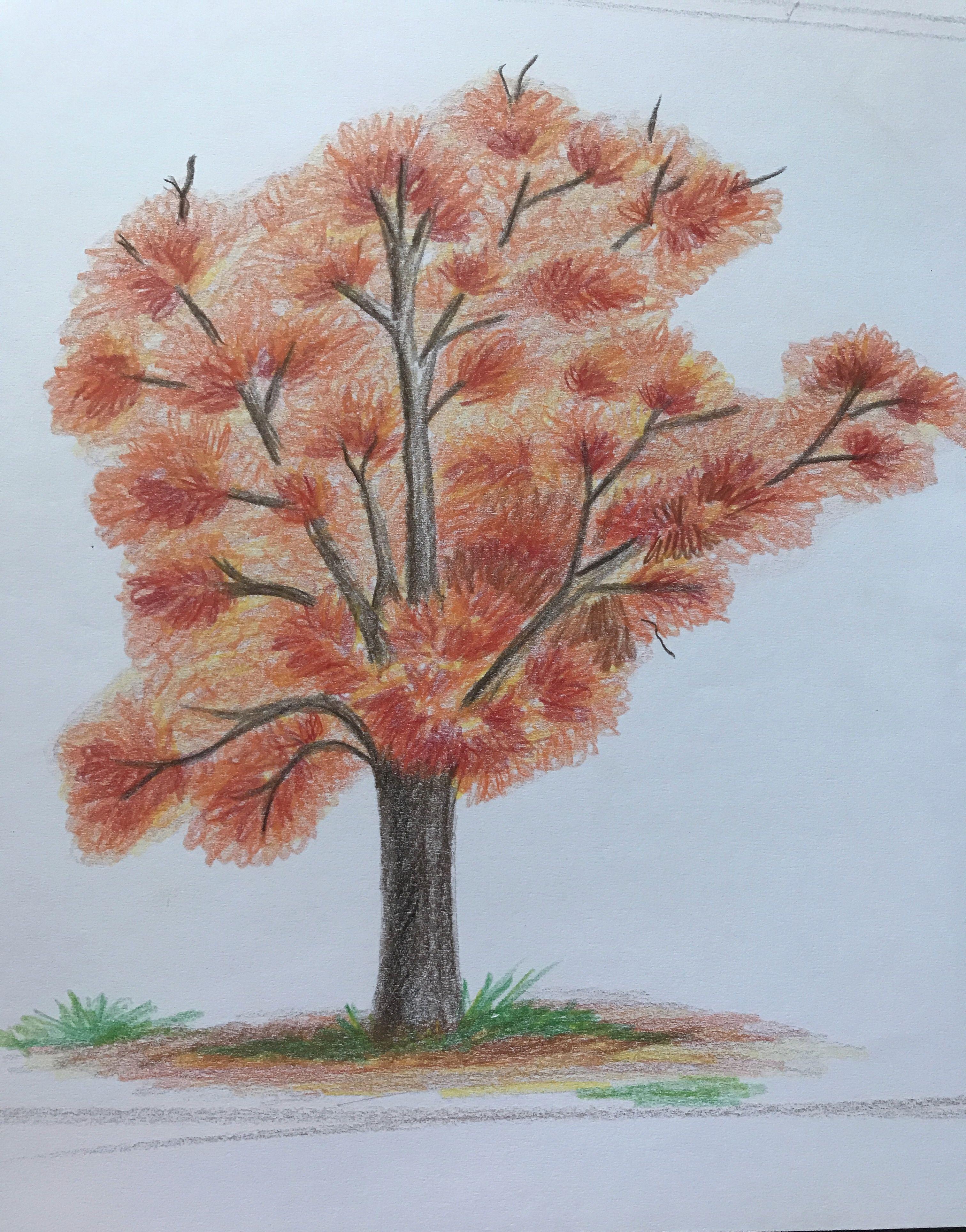 Árbol de fuego. Dibujo con lápices de colores. | Dibujo con lápices de  colores, Lapices de colores, Dibujos