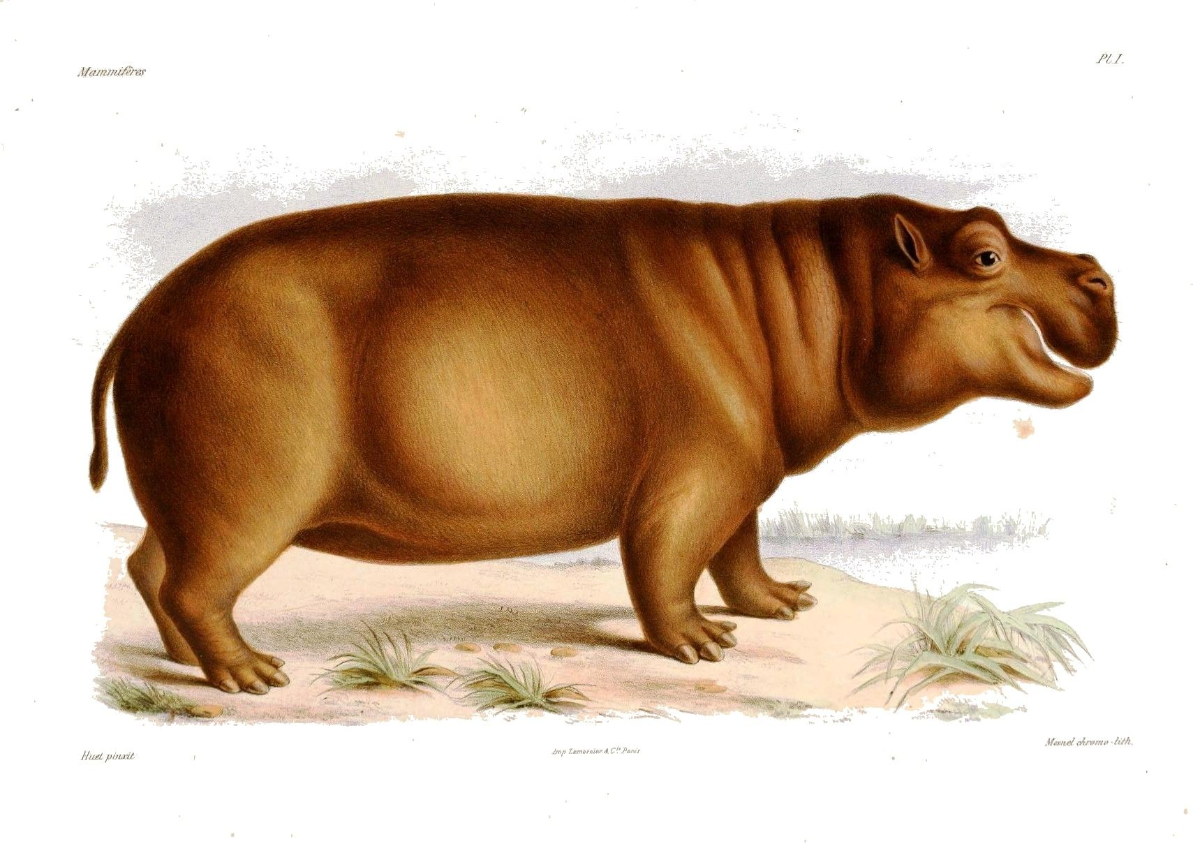 22+ Hippo anatomy information