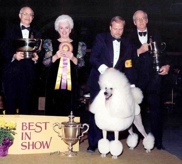 1991 Ch Whisperwind On A Carousel Poodle Standard Bis At