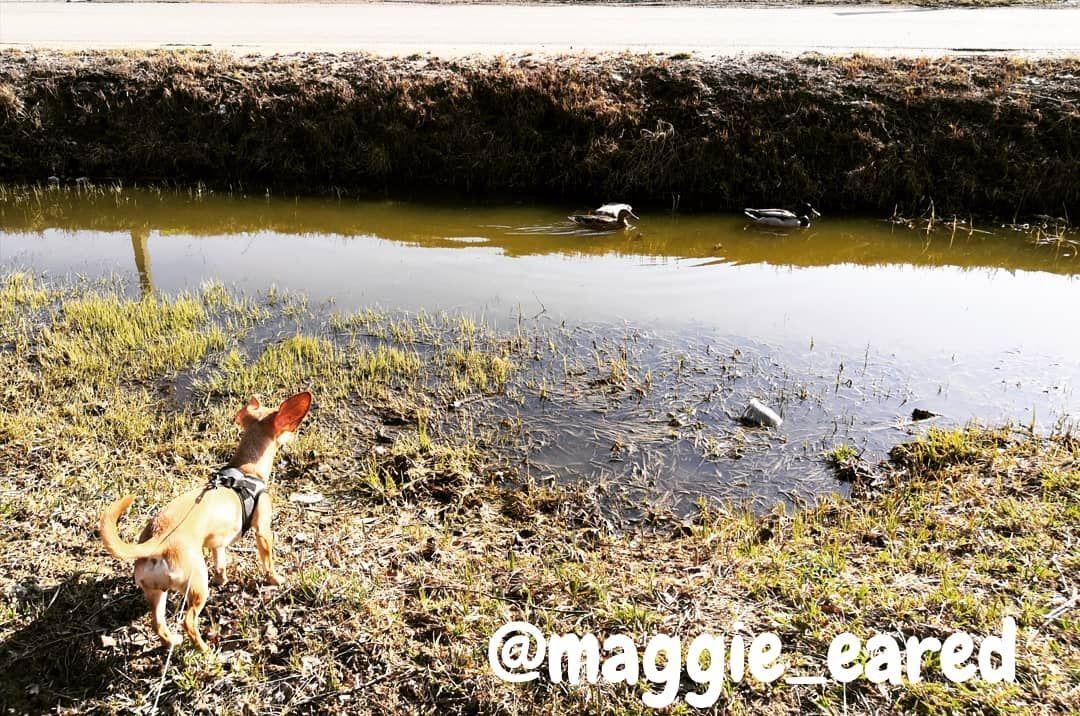 Hello! Usually you dont think that everything is fine with you everything is fine in the world and you dont... #dog #dogsofinstagram #dogs #puppy #dogstagram #instadog #pet #doglover #love #dogoftheday #cute #doglovers #instagram #pets #of #puppylove #doggo #puppies #cat #doglife #puppiesofinstagram #ilovemydog #dogsofinsta #animals #hund #doggy #petstagram #k #animal