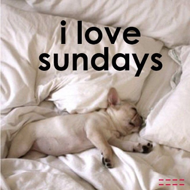 I Love Sundays Peaceloveworld Frenchie Frenchbulldog Puppy