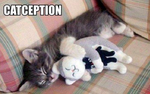 Kittehception