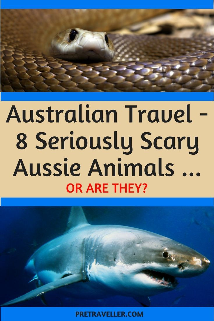 8 Seriously Scary Australian Animals (Or Are They?) (With