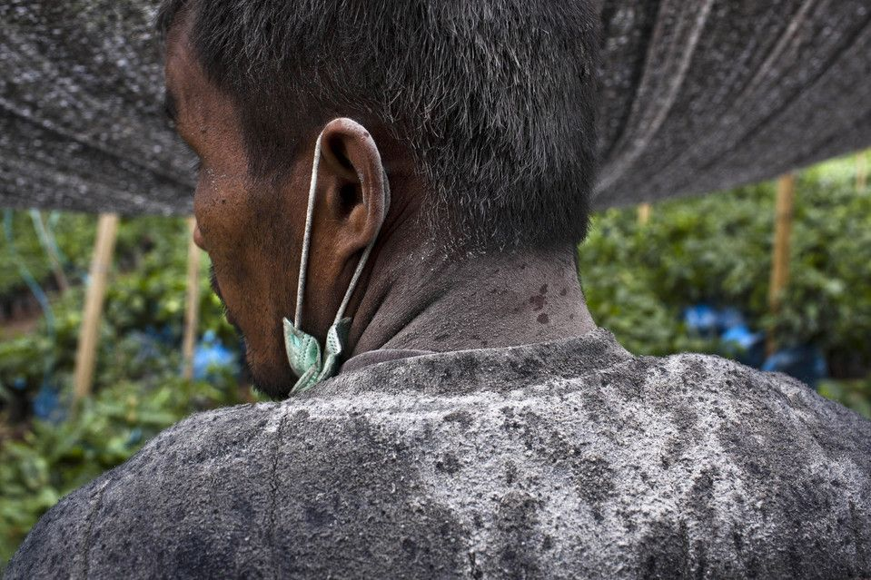 DIRTIED: An ash-covered man worked at a coffee plantation in Guru Kinayan village, located near Mount Sinabung on Thursday in North Sumatra,...