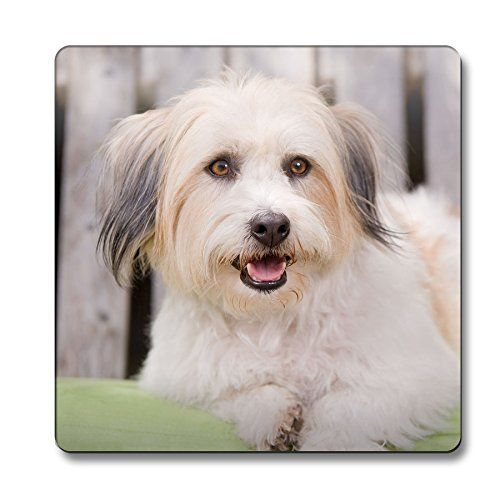 42285908d1dfd Beautiful Coton de Tulear Dog Coaster: Perfect gift for Coton lovers ...