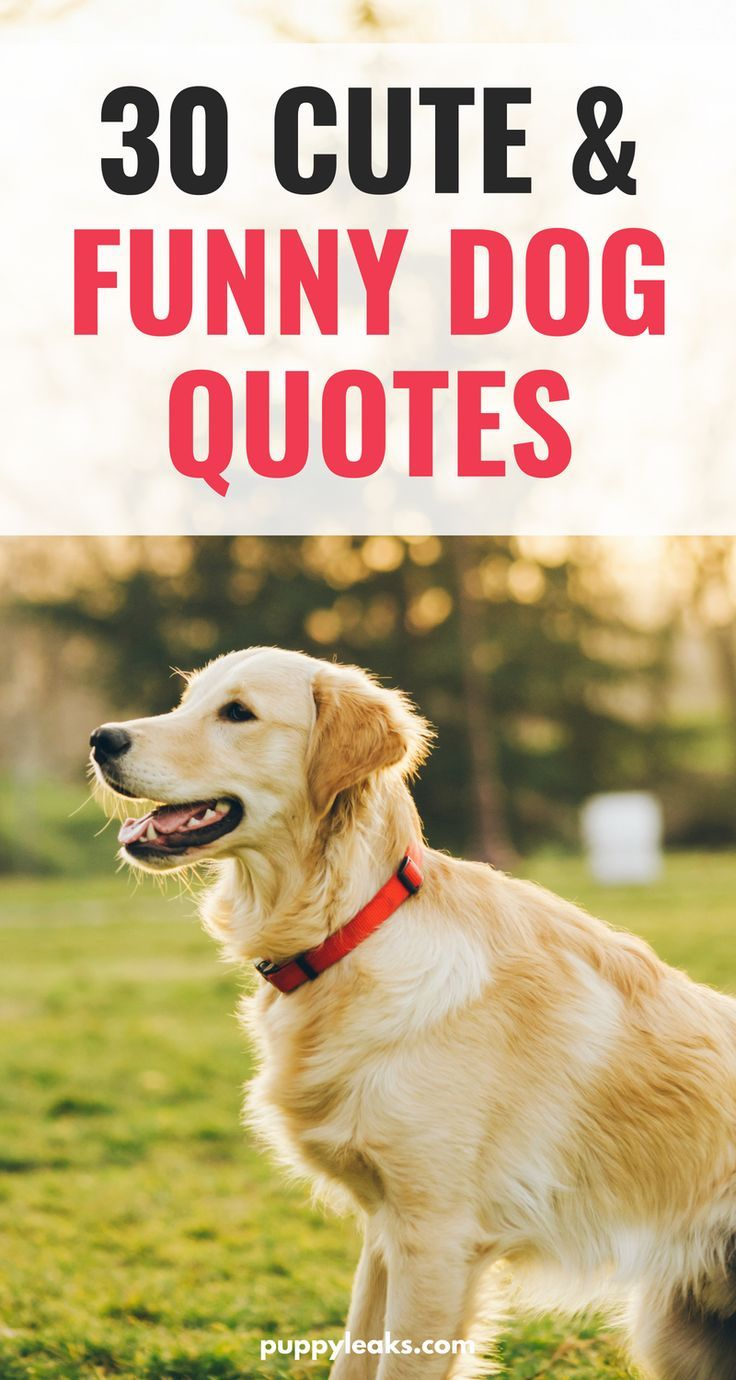 cute u funny dog quotes dog quotes pinterest dogs puppies