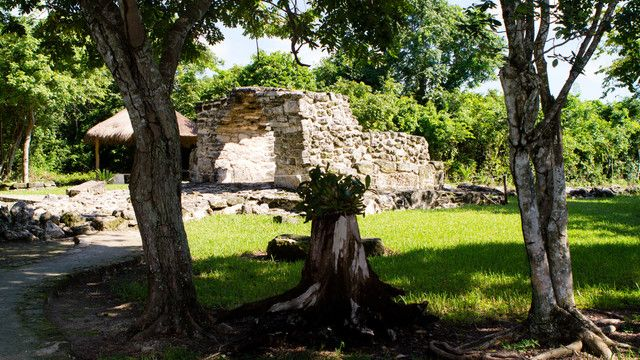 A Mayan ruin stands among trees and foliage
