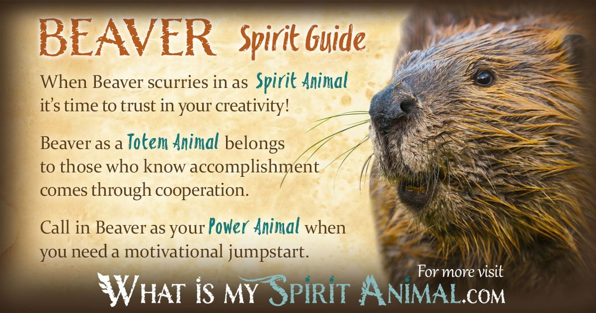 Beaver Symbolism Meaning Power Animal American Symbols And Totems