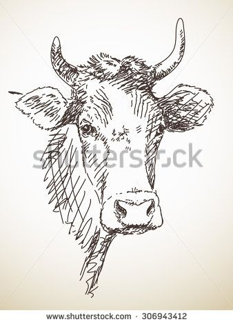 sketch of cow head isolated vector illustration hand drawn