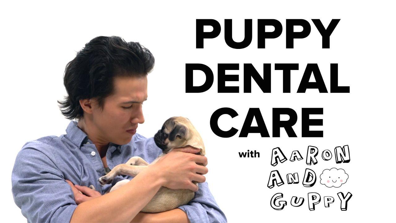 Puppy Baby Teeth Chart Ideas