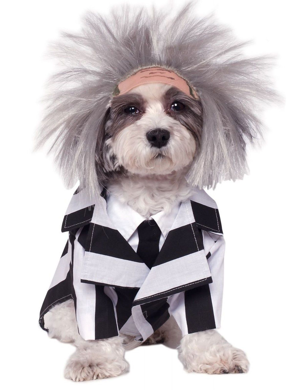Details About Beetlejuice Funny Dog Halloween Striped Pet Outfit