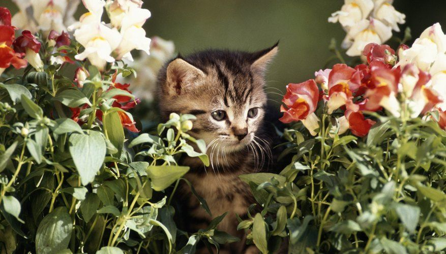 Home Remedies to Keep Cats Out of Plants in 2020 Flower