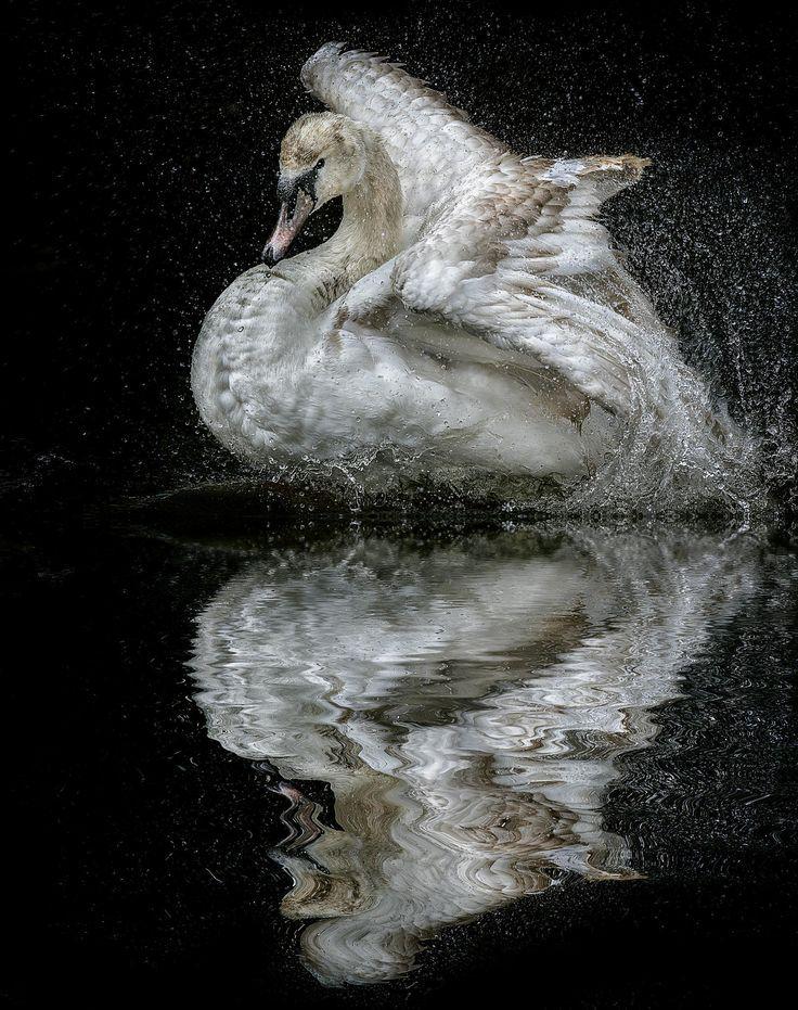 By Paul Keates On 500px Passaros Fotos Mundo Animal