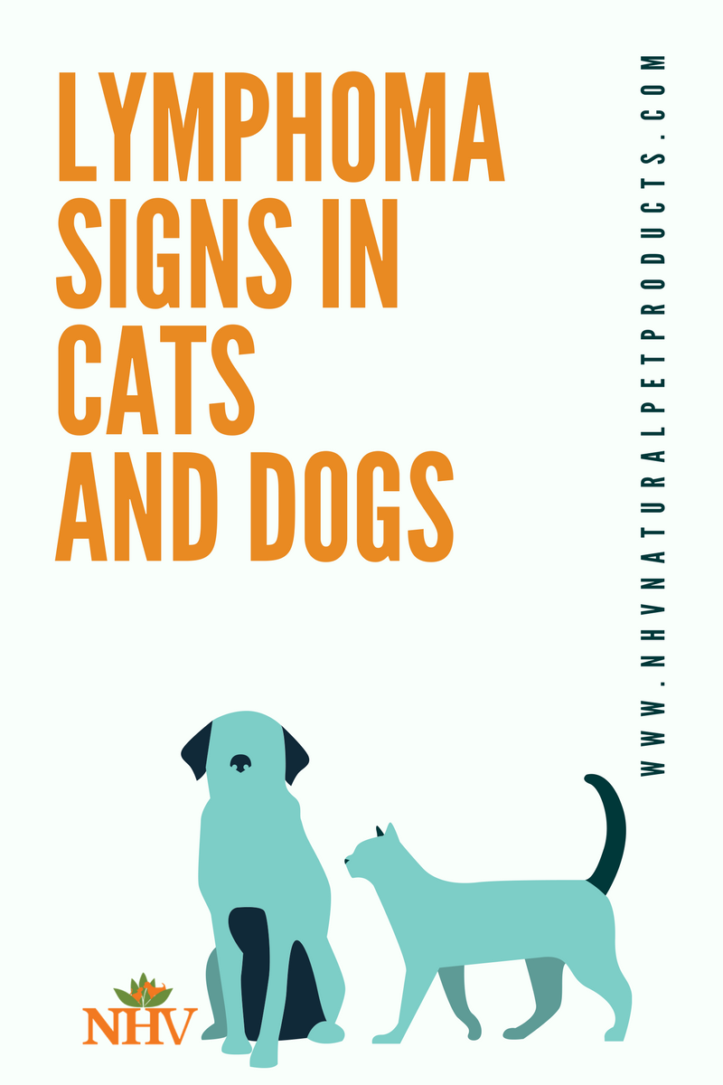 Lymphoma In Cats And Dogs Dog Cancer Cancer In Cats Lymphoma In Dogs