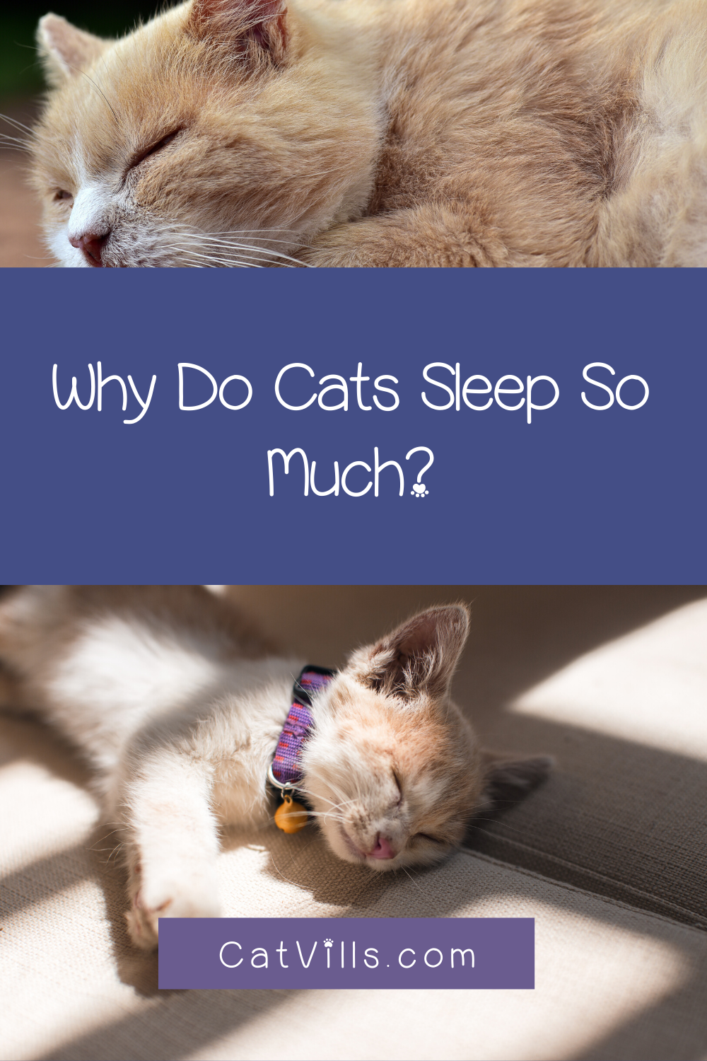 Why Do Cats Sleep So Much? Here's 3 Reasons Why! in 2020
