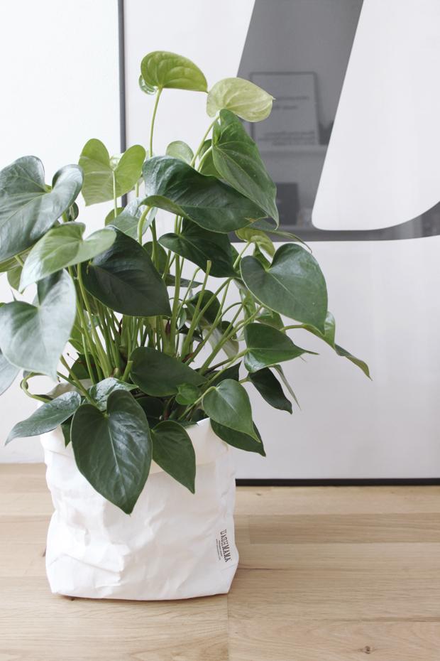 plants flowers zimmerpflanzen und pflanzen. Black Bedroom Furniture Sets. Home Design Ideas