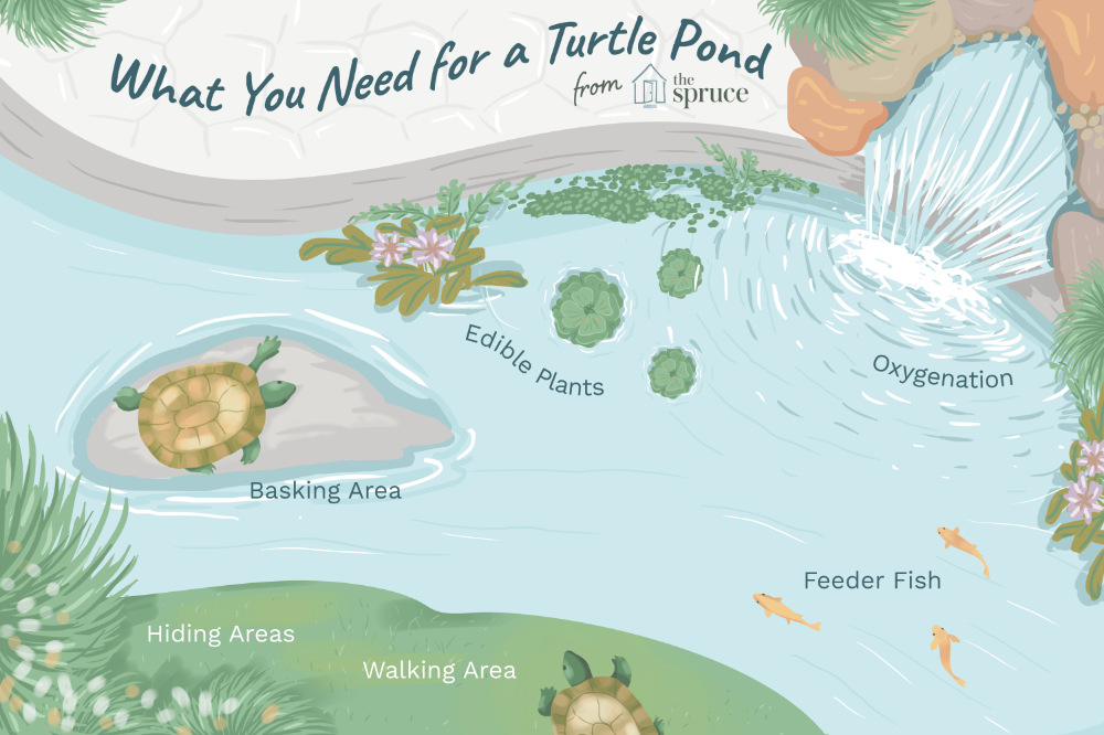 Learn How To Keep Pet Aquatic Turtles Such As Red Eared Sliders In