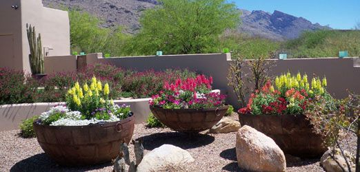 Delightful Residential Potted Gardens   The Contained Gardener Tucson, AZ   Sonoran  Gardens Inc.