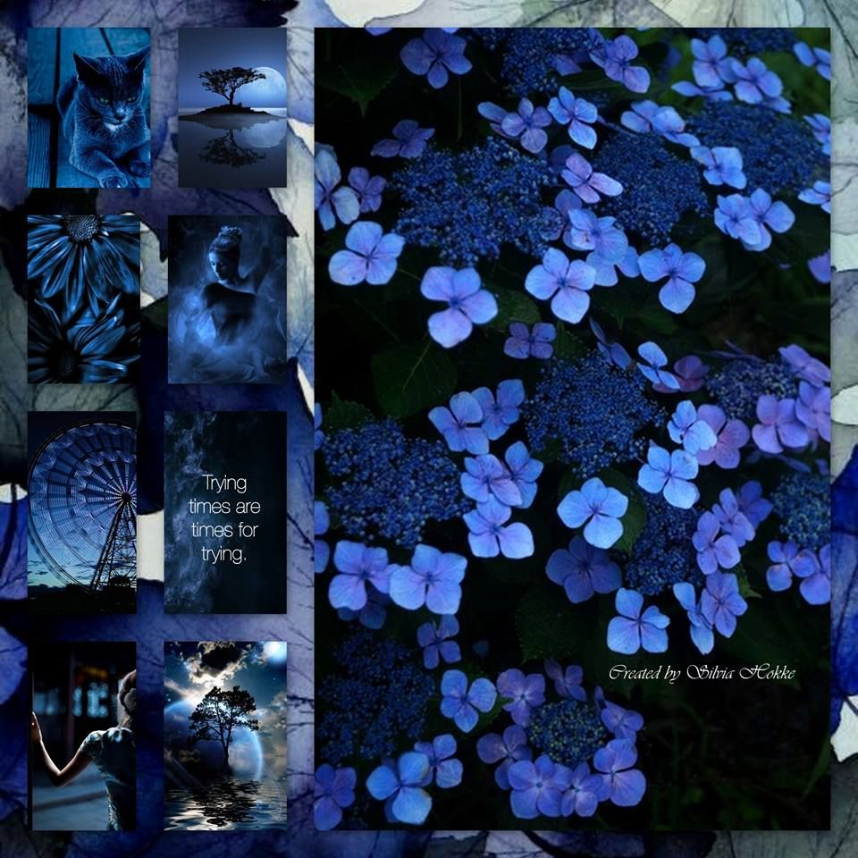 Midnight blue collage dreams fbook httpsfacebook explore blue wedding flowers blue flowers and more izmirmasajfo