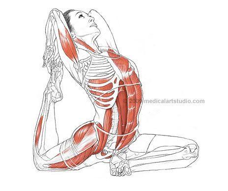 core muscle strength  anatomia do corpo humano treinos