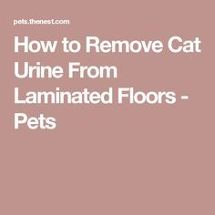 How To Remove Cat Urine From Laminated Floors Pets Pet Cleaner Cleaning