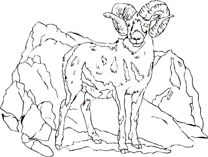 Giraffe Goat Kids Coloring Pages Free Printable
