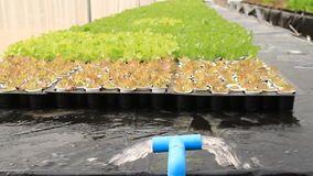 Circuito de agua en granja hidropónica metrajes