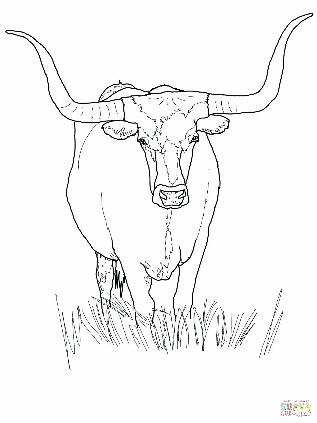 Free Cow Coloring Pages New Exciting Cow Coloring Pages