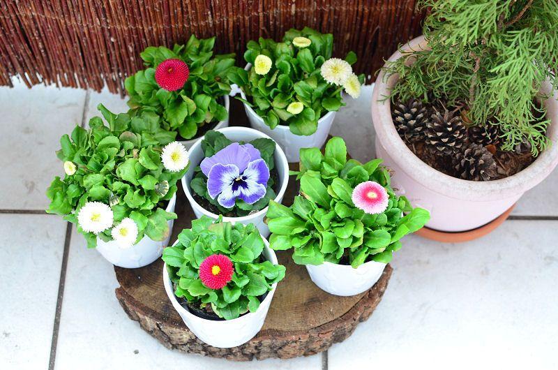 Pierwsze Balkonowe Kwiatki Kasmatka Plants Succulents