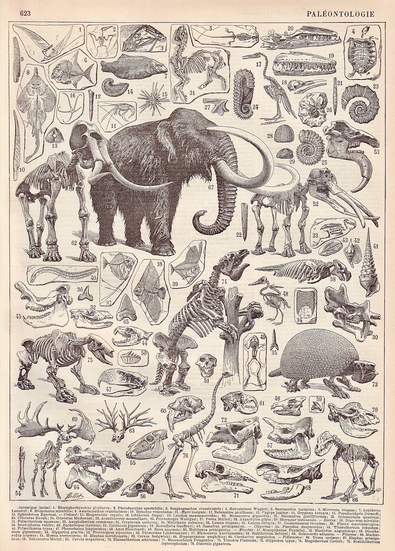French Antique Paleontologie Planche Illustree Originale Provenant Du Nouveau Larousse Illustre Francais Paul Auge 1897 Scientific Illustration Prehistoric Animals Antique Illustration