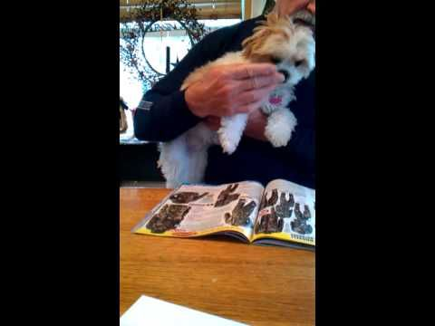 Our cute little Sofi helps daddy read his magazine.