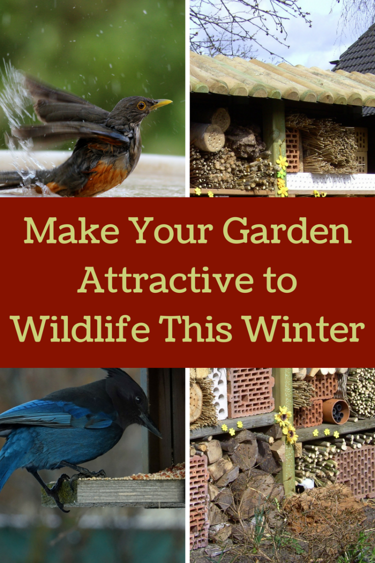 make your garden attractive to wildlife this winter by providing
