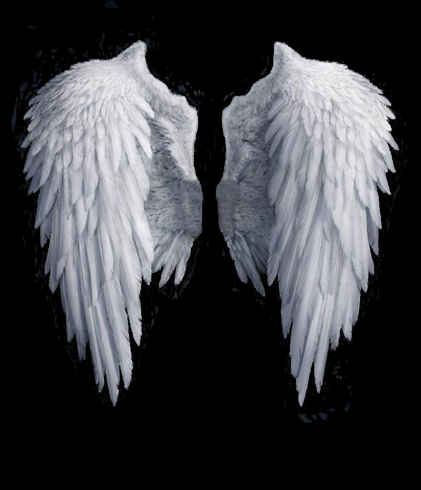 Wallpaper Free Nbsp Fi Yoyowall Com Wallpapers 201 Hellip I Transformed In Png Angel Wings Png Black Angel Wings Wings Png