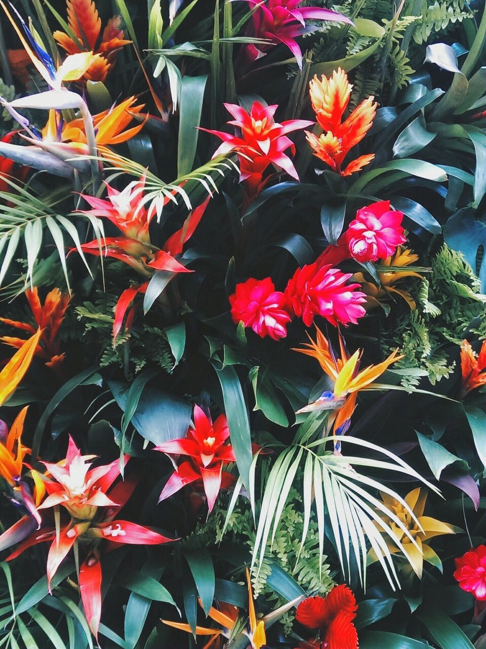 Jungle Fashion Tumblr With Images Tropical Flowers Plants