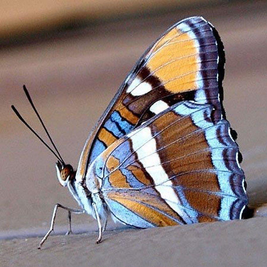 綺麗な昆虫たち おしゃれまとめの人気アイデア Pinterest 知佐子