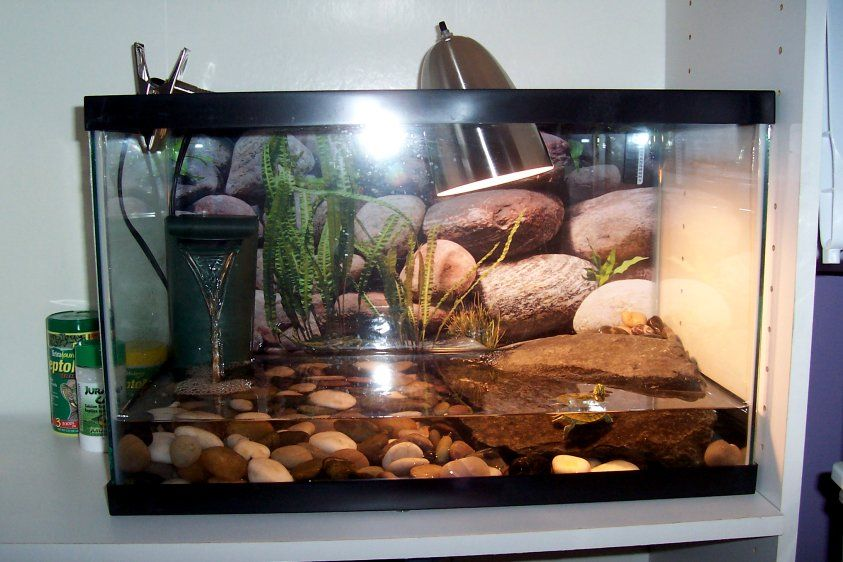 Turtle Tank D Animal Love Pinterest Turtle