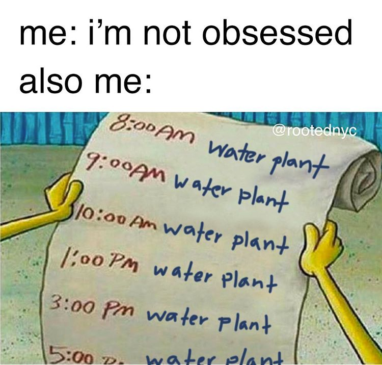 Rooted Nyc Åœ¨ Instagram ĸŠå'布 How S Everyone Else S Schedules Looking Like Today Don T Be A Plantbob And Overwater You Plant Jokes Gardening Memes Plant Puns
