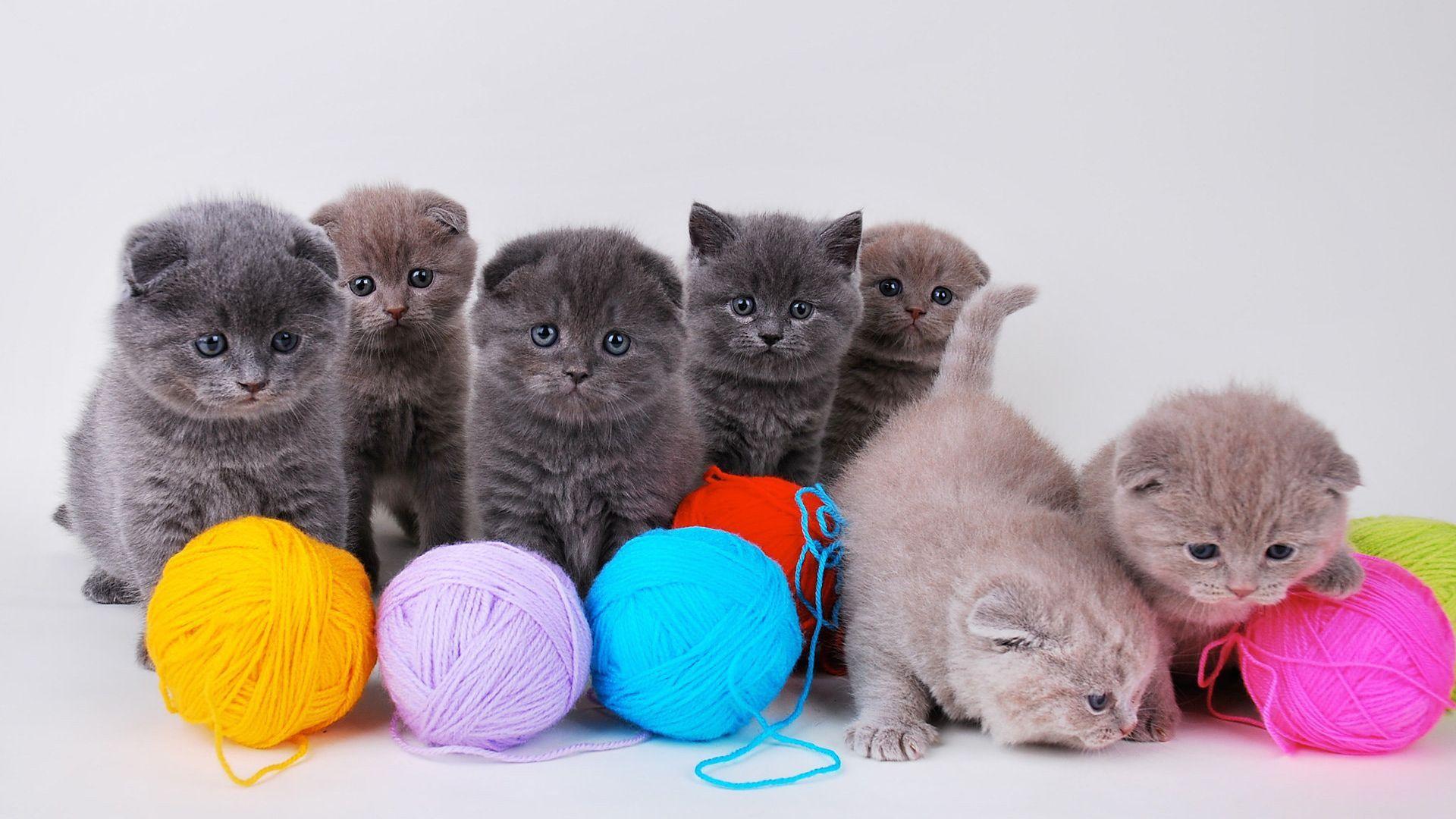 Chatons Mignons Avec Pelote De Laine Fonds D Ecran 1920x1080 Cute Kittens Chats Adorables Chaton