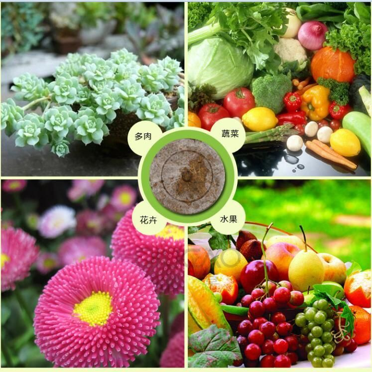 Diy Biodegradable Pots: 30mm Jiffy Peat Pellets Seed Starting Plugs DIY Nursery