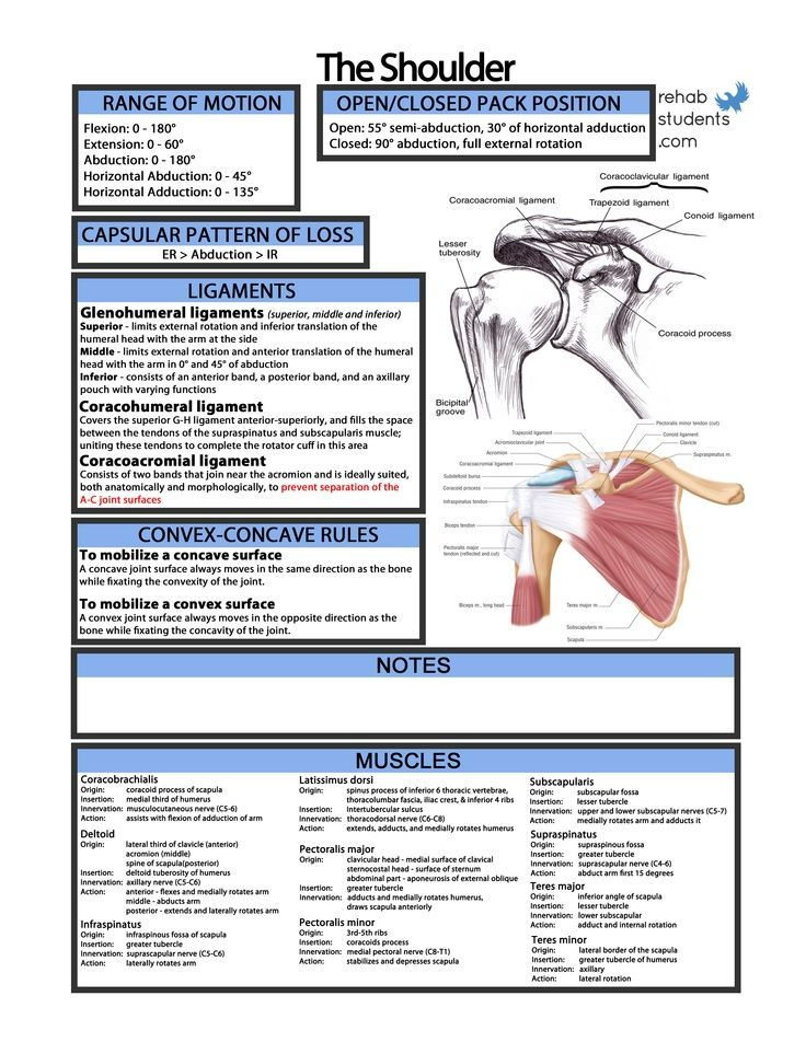 Shoulder Function RePinned By OttoolkitCom Your Source For