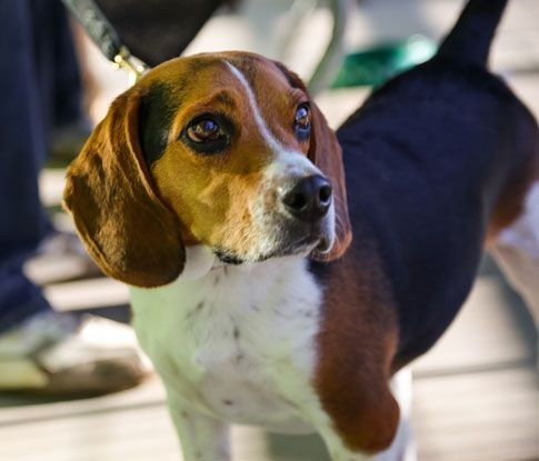 The Greenville Humane Society Is One Of The Largest No Kill Facilities In The