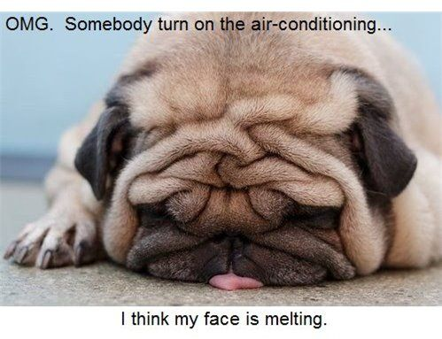Funny Dog Photo Omg Somebody Turn On The Air Conditioning I