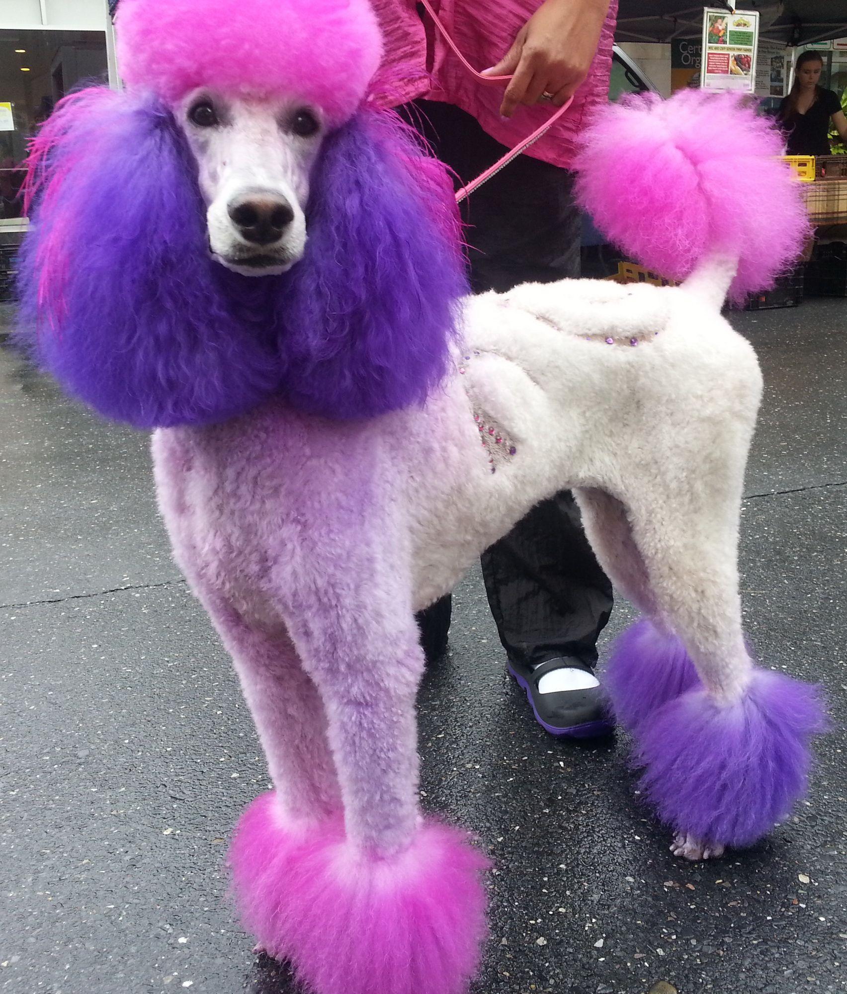 Strip Club Pink Poodle