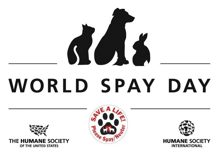 World Spay Day Street Dogs Humane Society Spay