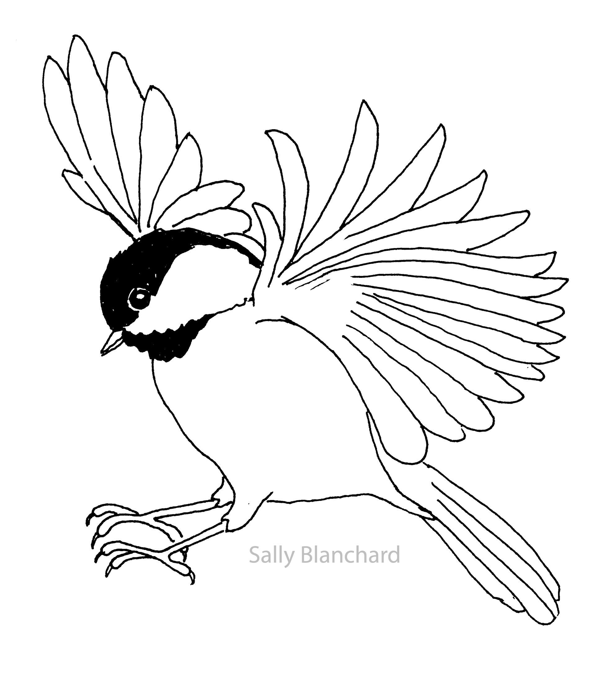 Sally Blanchard - Pen Line Drawing Landing Black-capped Chickadee ...